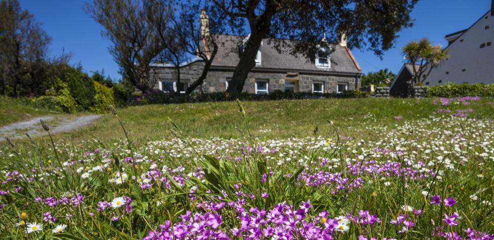 Spring flowers in Guernsey