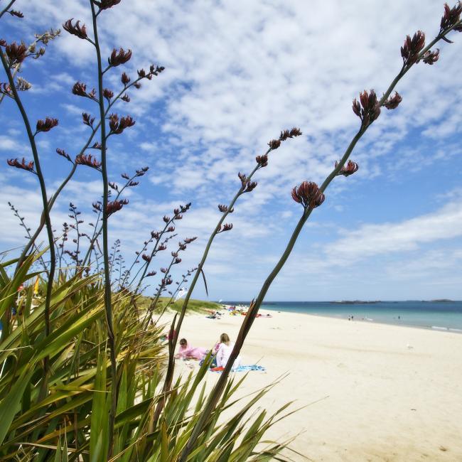 Shell beach in Herm