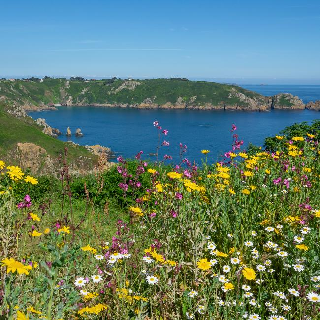 spring flowers on the south coast cliffs of St Martins
