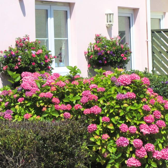 Mediterranean flowers in front of pink holiday rental cottage at The Ellingham Cottages