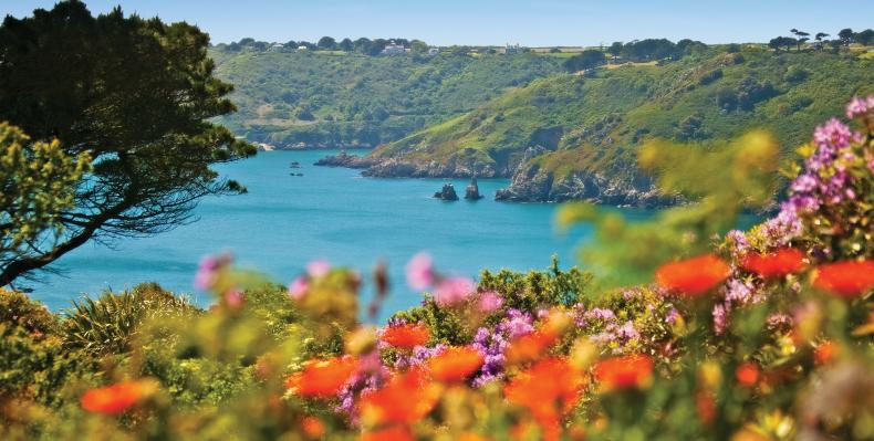 South coast cliffs with brightly coloured flowers in foreground
